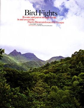 Birdfights3
