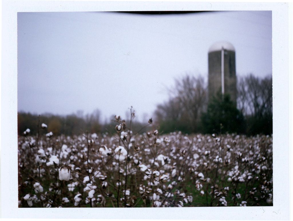 cotton field Oxford, Miss. 2009 Sandy Lang